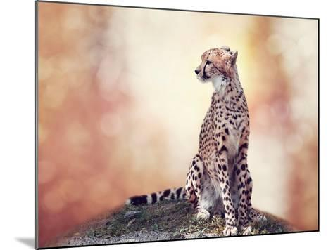 Cheetah Sitting on a Hill and Looking Around-Svetlana Foote-Mounted Photographic Print