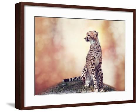 Cheetah Sitting on a Hill and Looking Around-Svetlana Foote-Framed Art Print