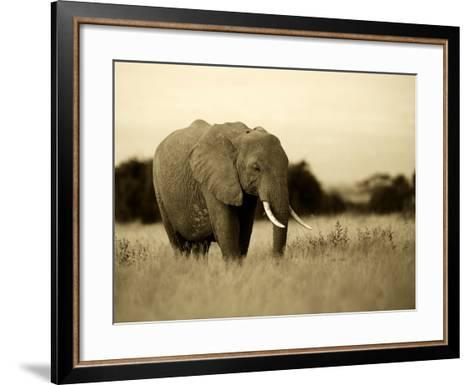 African Elephant in Amboseli National Park, Kenya-Santosh Saligram-Framed Art Print