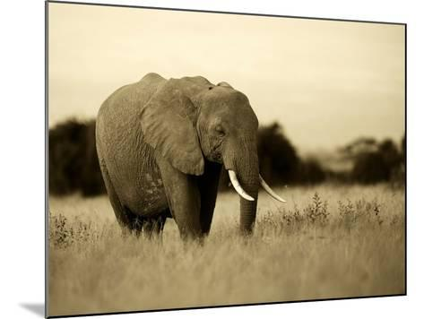 African Elephant in Amboseli National Park, Kenya-Santosh Saligram-Mounted Photographic Print