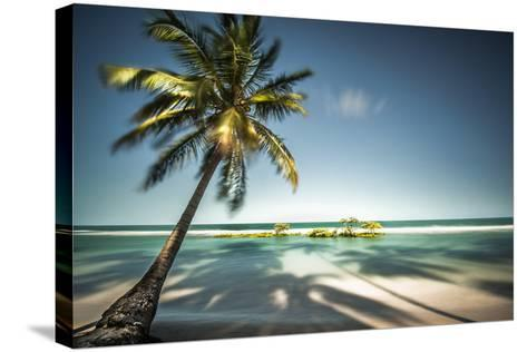 Palm Tree and Shadows on a Tropical Beach, Praia Dos Carneiros, Brazil- Dantelaurini-Stretched Canvas Print