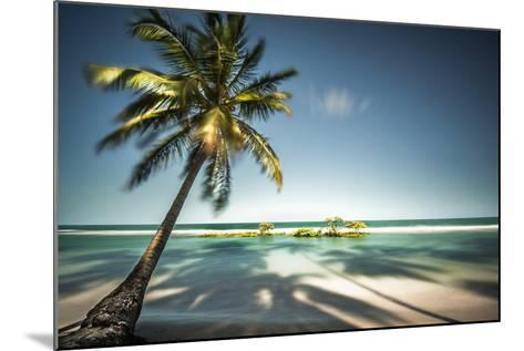 Palm Tree and Shadows on a Tropical Beach, Praia Dos Carneiros, Brazil- Dantelaurini-Mounted Photographic Print