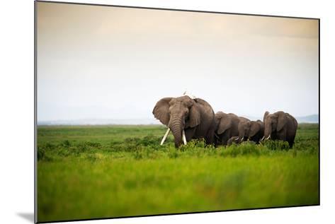 African Elephant Herd at Sunset in Amboseli National Park, Kenya-Santosh Saligram-Mounted Photographic Print
