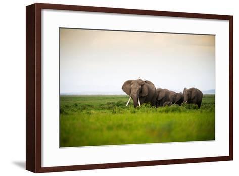 African Elephant Herd at Sunset in Amboseli National Park, Kenya-Santosh Saligram-Framed Art Print