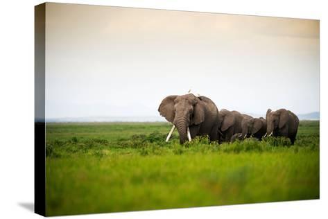 African Elephant Herd at Sunset in Amboseli National Park, Kenya-Santosh Saligram-Stretched Canvas Print