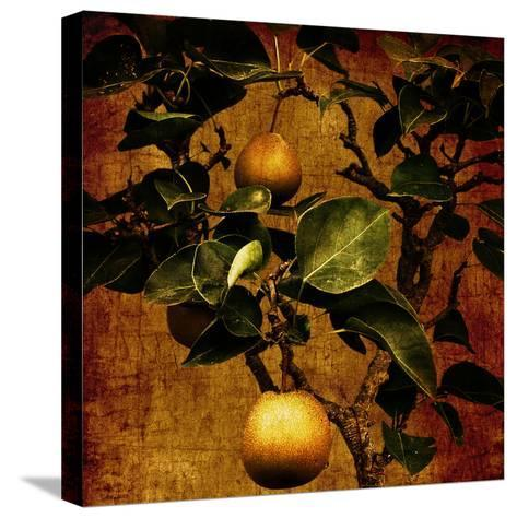 A Bonsai Pear Tree with Two Fruit Against a Rich, Gold Craquelure Background-Trigger Image-Stretched Canvas Print