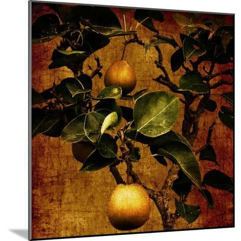 A Bonsai Pear Tree with Two Fruit Against a Rich, Gold Craquelure Background-Trigger Image-Mounted Photographic Print