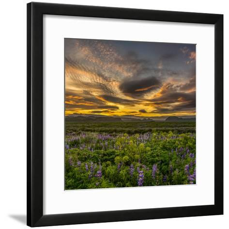 Lupines, Myrdalssandur, South Coast, Iceland-Ragnar Th Sigurdsson-Framed Art Print