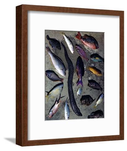 December 1946: Tropical Fish Caught by Local Fishermen in Montego Bay, Jamaica-Eliot Elisofon-Framed Art Print