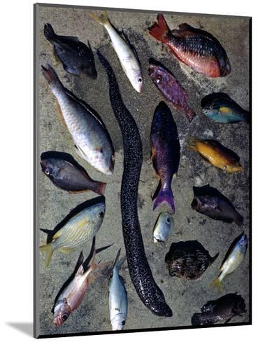 December 1946: Tropical Fish Caught by Local Fishermen in Montego Bay, Jamaica-Eliot Elisofon-Mounted Photographic Print