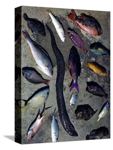 December 1946: Tropical Fish Caught by Local Fishermen in Montego Bay, Jamaica-Eliot Elisofon-Stretched Canvas Print
