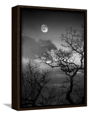 A Nearly Full Moon Sets over the Blue Ridge Mountains at Dawn-Amy & Al White & Petteway-Framed Canvas Print