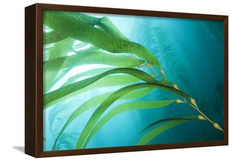 A Kelp Forest-Cesare Naldi-Framed Canvas Print