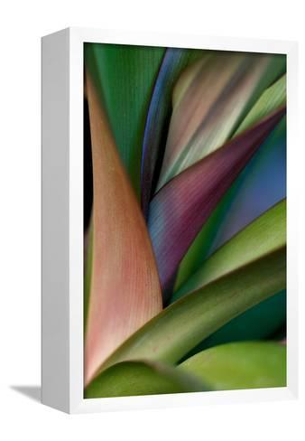 Abstract Floral of a Bird of Paradise Plant-Vickie Lewis-Framed Canvas Print