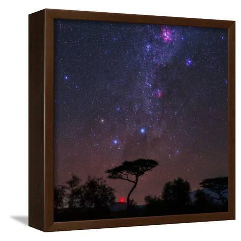 The Southern Cross and Milky Way over a Tree. the Carina Nebula Is the Red Cloud at Top-Babak Tafreshi-Framed Canvas Print