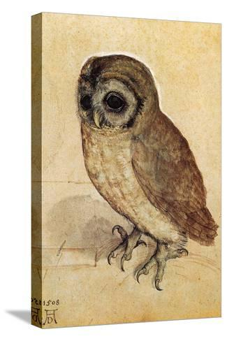 Screech Owl--Stretched Canvas Print