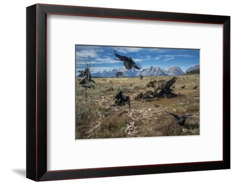 A grizzly bear fends off ravens to feed on a bison carcass.-Charlie Hamilton James-Framed Art Print