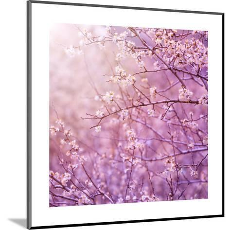Beautiful Tender Cherry Tree Blossom in Morning Purple Sun Light-Anna Omelchenko-Mounted Art Print