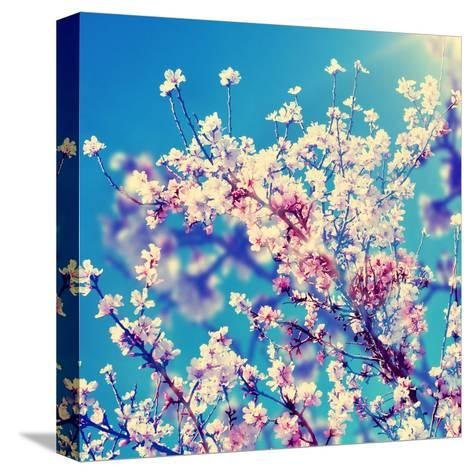 Double Exposure of Almond Trees in Full Bloom-nito-Stretched Canvas Print