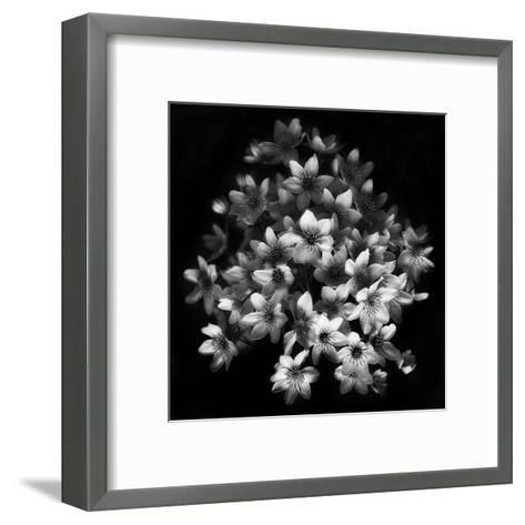 Early Sensation-Yvette Depaepe-Framed Art Print