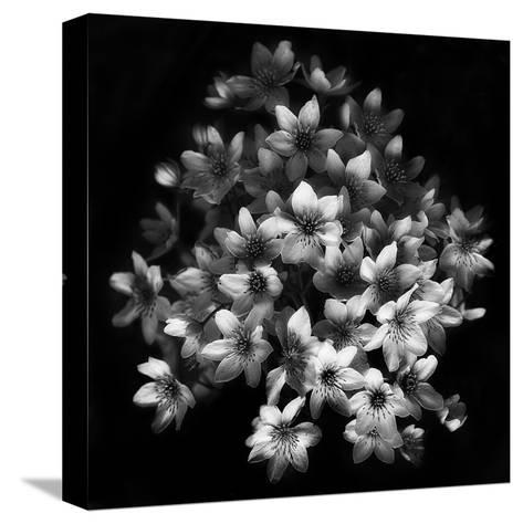 Early Sensation-Yvette Depaepe-Stretched Canvas Print