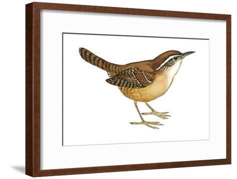 Carolina Wren (Thryothorus Ludovicianus), Birds-Encyclopaedia Britannica-Framed Art Print