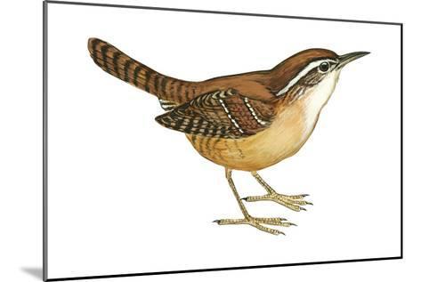 Carolina Wren (Thryothorus Ludovicianus), Birds-Encyclopaedia Britannica-Mounted Art Print