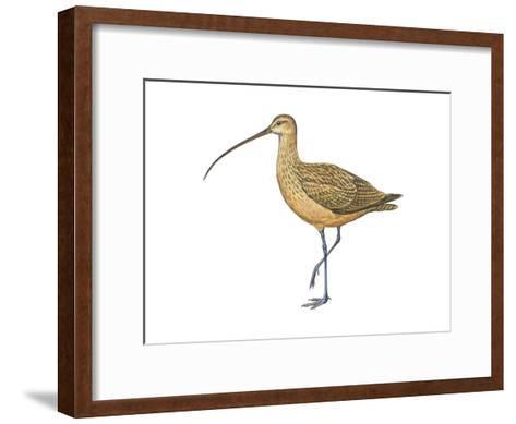 Long-Billed Curlew (Numenius Americanus), Birds-Encyclopaedia Britannica-Framed Art Print