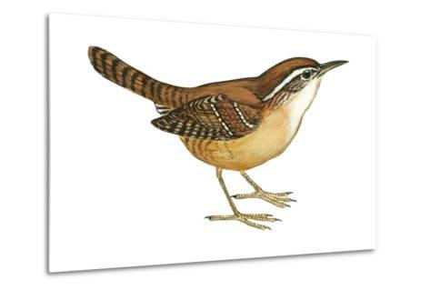 Carolina Wren (Thryothorus Ludovicianus), Birds-Encyclopaedia Britannica-Metal Print