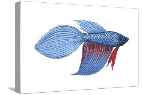 Betta (Betta Splendens), Fishes-Encyclopaedia Britannica-Stretched Canvas Print