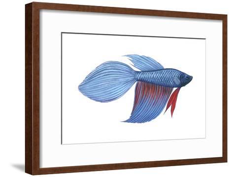 Betta (Betta Splendens), Fishes-Encyclopaedia Britannica-Framed Art Print