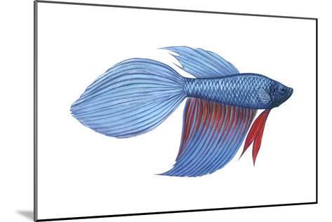 Betta (Betta Splendens), Fishes-Encyclopaedia Britannica-Mounted Art Print
