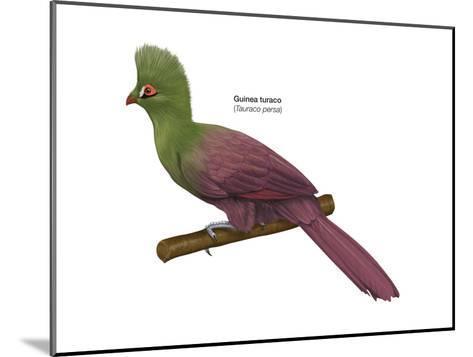 Guinea Turaco (Tauraco Persa), Birds-Encyclopaedia Britannica-Mounted Art Print