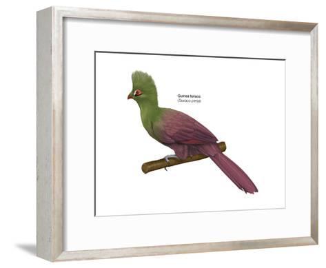 Guinea Turaco (Tauraco Persa), Birds-Encyclopaedia Britannica-Framed Art Print