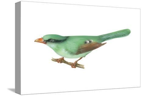 Green Magpie (Cissa Chinensis), Birds-Encyclopaedia Britannica-Stretched Canvas Print