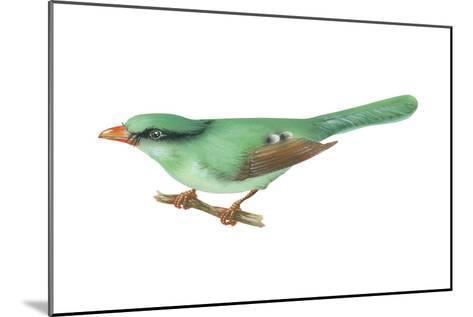 Green Magpie (Cissa Chinensis), Birds-Encyclopaedia Britannica-Mounted Art Print