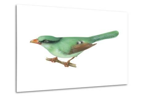 Green Magpie (Cissa Chinensis), Birds-Encyclopaedia Britannica-Metal Print