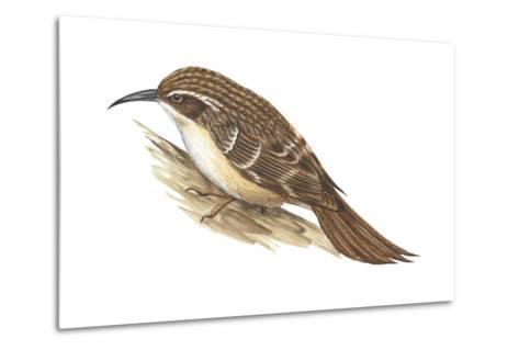 Creeper (Certhia Familiaris), Birds-Encyclopaedia Britannica-Metal Print