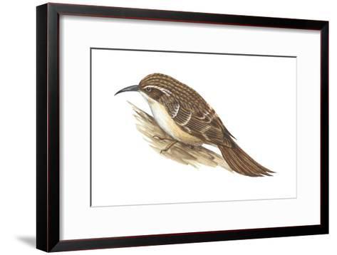 Creeper (Certhia Familiaris), Birds-Encyclopaedia Britannica-Framed Art Print