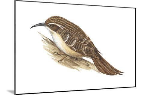 Creeper (Certhia Familiaris), Birds-Encyclopaedia Britannica-Mounted Art Print