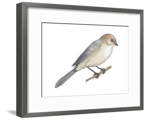 Bushtit (Psaltriparus Minimus), Birds-Encyclopaedia Britannica-Framed Art Print