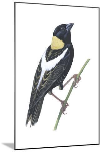Bobolink (Dolichonyx Oryzivorus), Birds-Encyclopaedia Britannica-Mounted Art Print