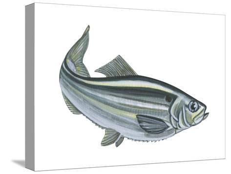 Alewife (Pomolobus Pseudoharengus), Fishes-Encyclopaedia Britannica-Stretched Canvas Print