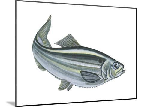 Alewife (Pomolobus Pseudoharengus), Fishes-Encyclopaedia Britannica-Mounted Art Print