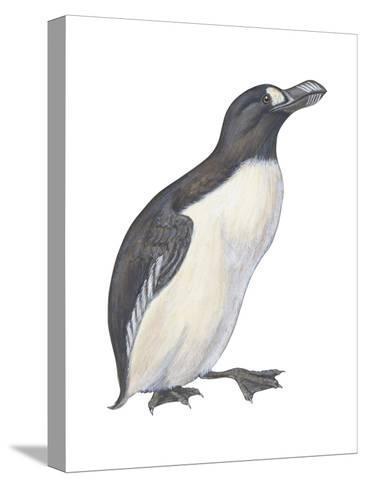 Great Auk (Pinguinnus Impennis), Birds-Encyclopaedia Britannica-Stretched Canvas Print