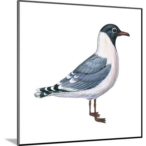 Franklin's Gull (Larus Pipixcan), Birds-Encyclopaedia Britannica-Mounted Art Print