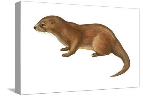 European Otter (Lutra Lutra), Mammals-Encyclopaedia Britannica-Stretched Canvas Print