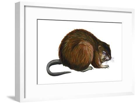 Muskrat (Ondatra Zibethica), Mammals-Encyclopaedia Britannica-Framed Art Print