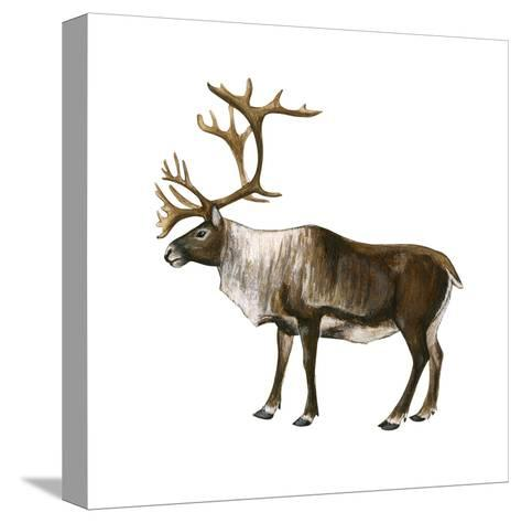 Mountain Caribou (Rangifer Montanus), Mammals-Encyclopaedia Britannica-Stretched Canvas Print
