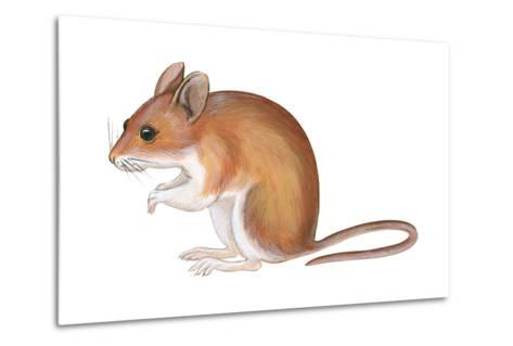 Golden Mouse (Peromyscus Nuttalli), Mammals-Encyclopaedia Britannica-Metal Print